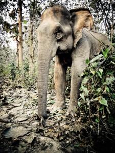 Andre's ruhiger Elefant wartet geduldig im Dschungel