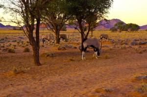 Oryx begrüßen uns